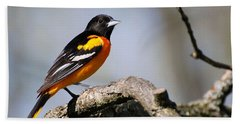 Baltimore Oriole Hand Towel by Christina Rollo
