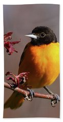 Baltimore Oriole II Bath Towel