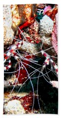 Banded Coral Shrimp - Caught In The Act Bath Towel