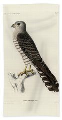 Bath Towel featuring the drawing Banded Kestrel by J D L Franz Wagner