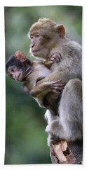 Barbary Macaque Mother And Baby Bath Towel