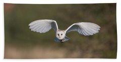 Barn Owl Approaching Bath Towel