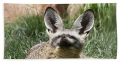 Bat-eared Fox Hand Towel