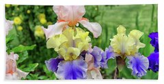 Bearded Iris Edith Wolford  Hand Towel