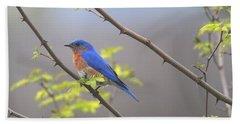 Beautiful Eastern Bluebird Hand Towel