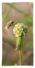 Bee Fly On A Wildflower Bath Towel by Christopher L Thomley