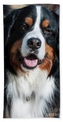 Bernese Mountain Dog Portrait  Hand Towel