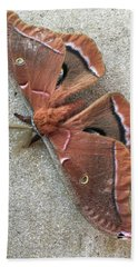 Big Beautiful Silk Moth Hand Towel