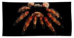 Big Hairy Tarantula Theraphosidae Isolated On Black Background Bath Towel