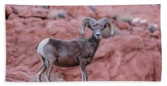 Big Horn Sheep Valley Of Fire Hand Towel