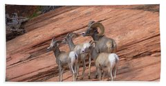 Big Horn Sheep, Zion National Park Hand Towel