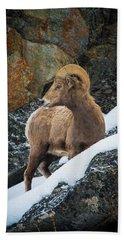 Bighorn Ram 1 Bath Towel