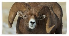 Bighorn Ram In Montana Bath Towel