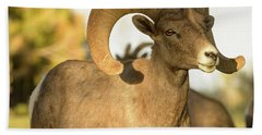 Bighorn Ram Bath Towel by Scott Warner