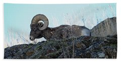 Bighorn Sheep Hand Towel by Cindy Murphy - NightVisions