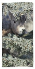 Bath Towel featuring the photograph Bighorn Sheep Lamb's Hiding Place by Jennie Marie Schell