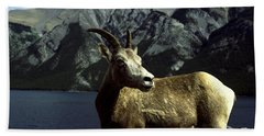 Bath Towel featuring the photograph Bighorn Sheep by Sally Weigand