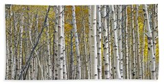 Birch Tree Grove With A Touch Of Yellow Color Bath Towel