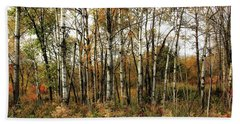 Birch Trees In Autumn Hand Towel by Jimmy Ostgard