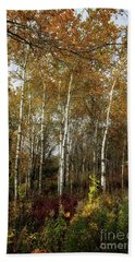 Birch Trees  Hand Towel by Jimmy Ostgard