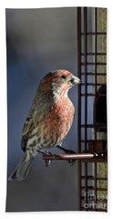 Bird Feeding In The Afternoon Sun Bath Towel