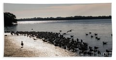 Birds At The Beach Hand Towel
