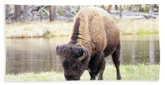 Bison By Water Hand Towel by Steve McKinzie
