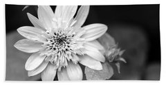 Hand Towel featuring the photograph Black And White Sunrise Coreopsis by Christina Rollo