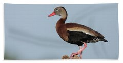 Black-bellied Whistling Duck Hand Towel