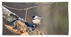 Black Capped Chickadee 1134 Bath Towel