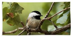 Black Capped Chickadee On Branch Bath Towel by Sheila Brown