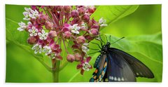 Black Swallowtail 54 Hand Towel