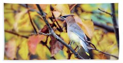 Bath Towel featuring the photograph Blending In With Autumn - Cedar Waxwing by Kerri Farley