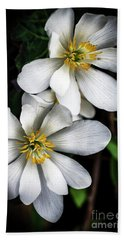 Hand Towel featuring the photograph Bloodroot In Bloom by Thomas R Fletcher