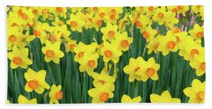 Bath Towel featuring the photograph Blooming Yellow Daffodils by Hans Engbers