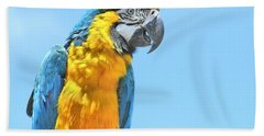 Blue And Gold Macaw Bath Towel by Debbie Stahre