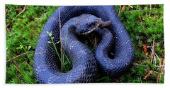 Blue Hognose Hand Towel