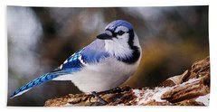 Blue Jay Day Bath Towel