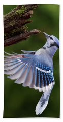 Bath Towel featuring the photograph Blue Jay In Flight by Mircea Costina Photography