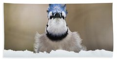 Blue Jay In Snow Bath Towel