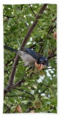 Bath Towel featuring the photograph Blue Jay by Jennifer Muller