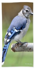 Blue Jay Juvenile Animal Portrait Bath Towel by A Gurmankin