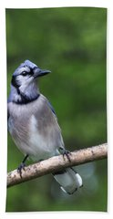 Blue Jay On Alert Bath Towel