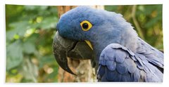Blue Macaw Hand Towel
