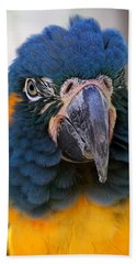 Blue-throated Macaw Close-up Hand Towel