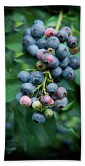 Blueberry Cluster Hand Towel by Kim Henderson