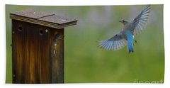 Bluebird Feeding Time Hand Towel
