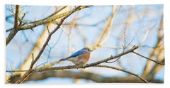 Bluebird In Tree Hand Towel