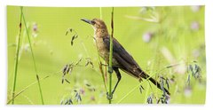 Boat-tailed Grackle Female Hand Towel