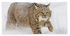 Bobcat In Snow Hand Towel